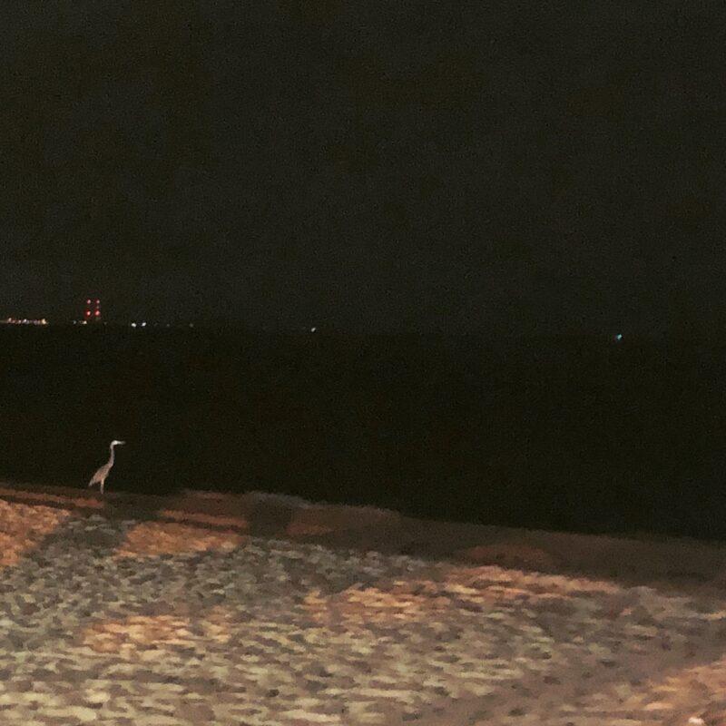 Blue-Heron-Beach-OmMyGod