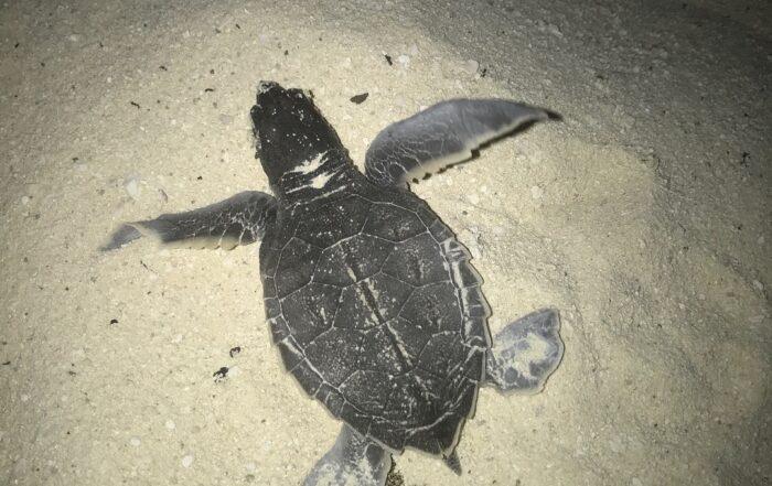 OmMyGod-Dialectic-Yoga-Sea-Turtle
